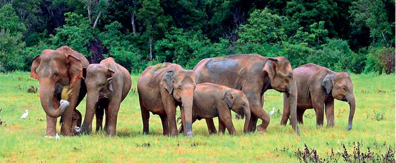 Torture Of Wild Elephants And Destruction Of Wildlife And