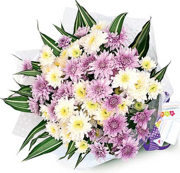 Lassana Flora Launches Exotic Range Of Chrysanthemums Ft Online