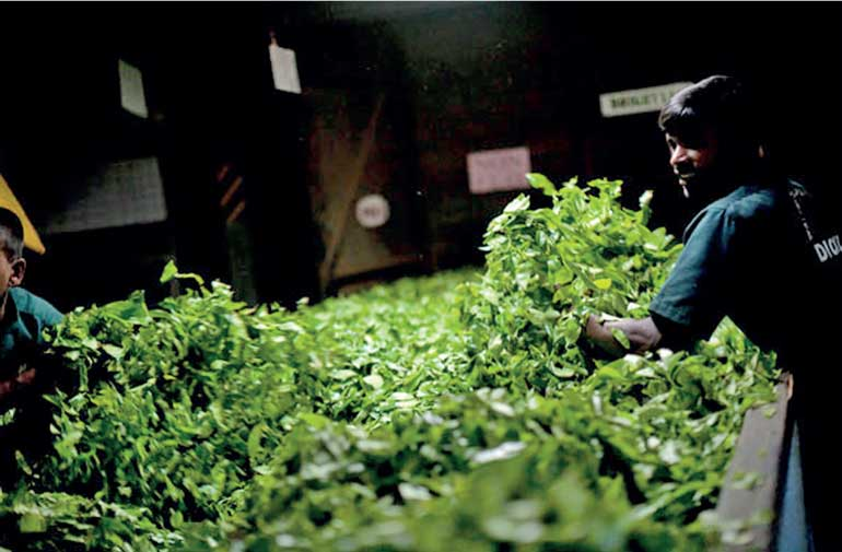 Exporters list 12 consequences of not liberalising tea imports | FT
